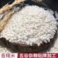 5斤新鲜圆糯米 香粘江米 五谷杂粮 粗粮包粽子酿酒散装糯米 百姓粮油